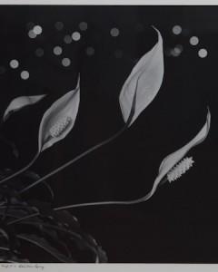 max dupain lillies