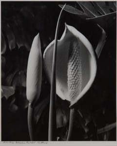 max dupain monstera