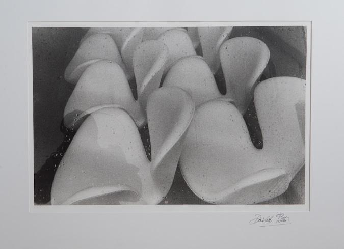 David Potts Swan Chairs
